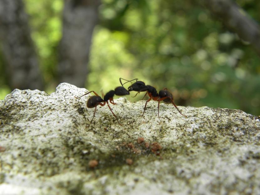 Hormiga en hoja