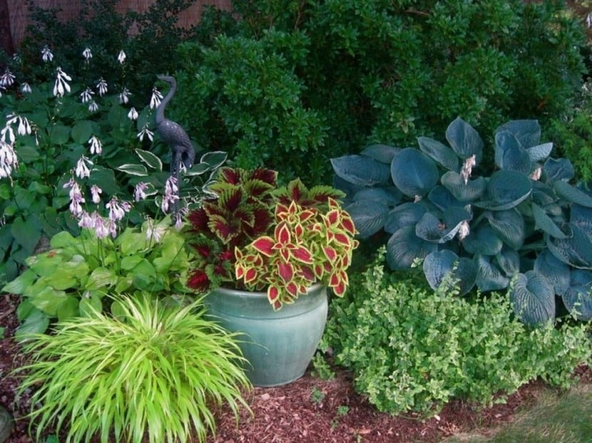Libros sobre dise o de jardines - Plantas de jardin fotos ...
