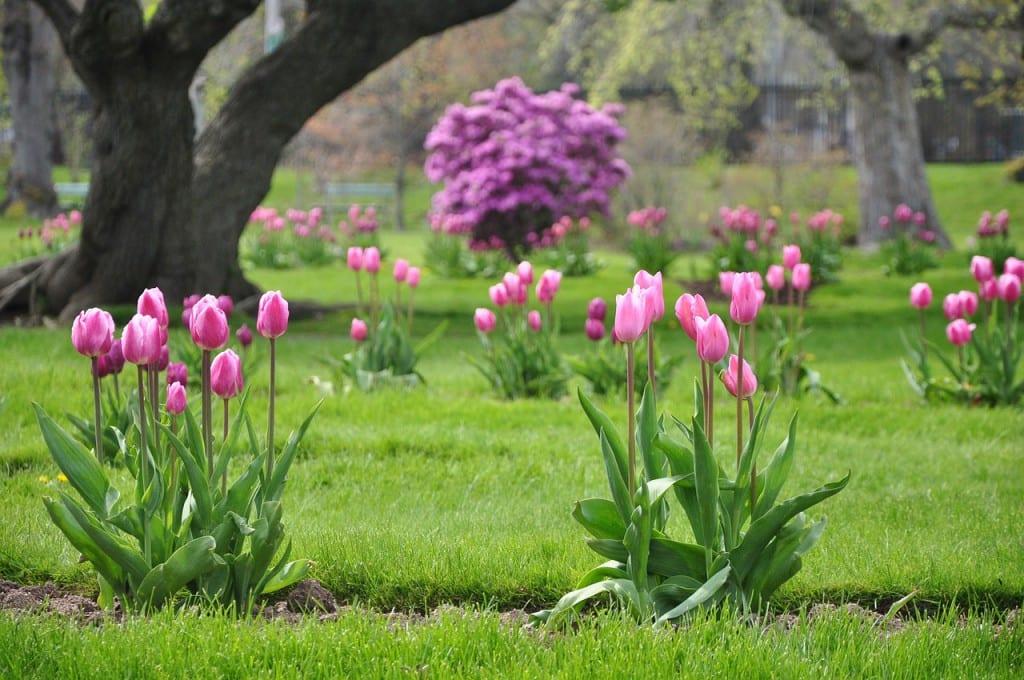 jardín con tulipanes