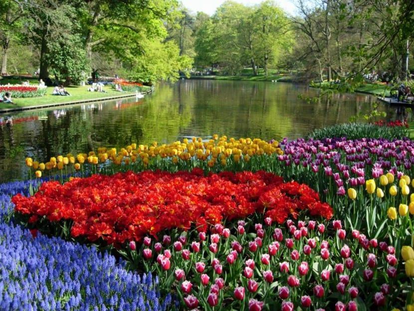 Jardín de tulipanes
