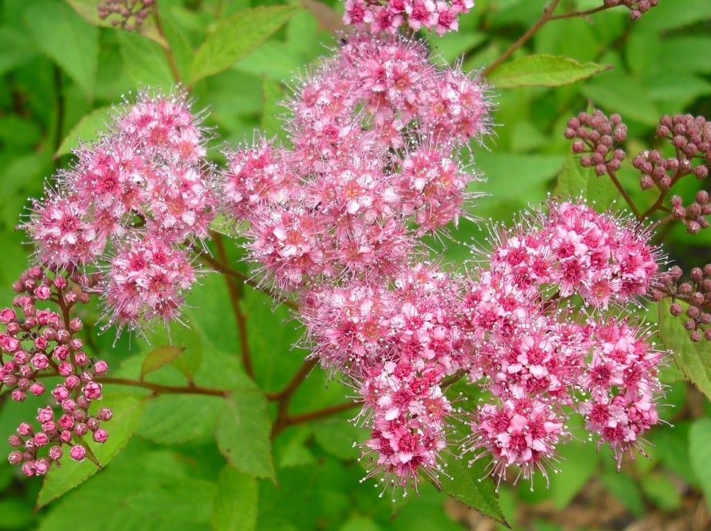 Planta flor