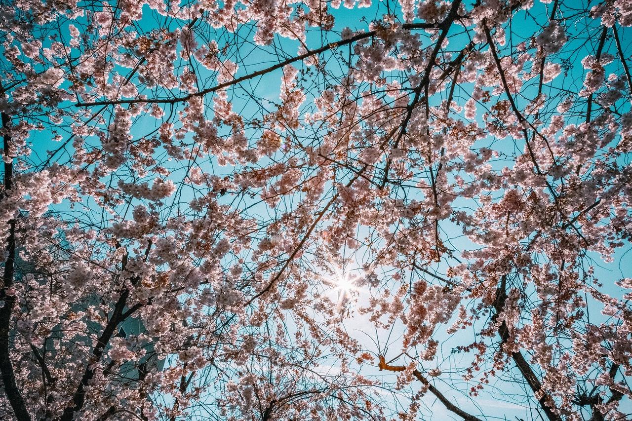 Los árboles con flores son ideales para embellecer el jardín
