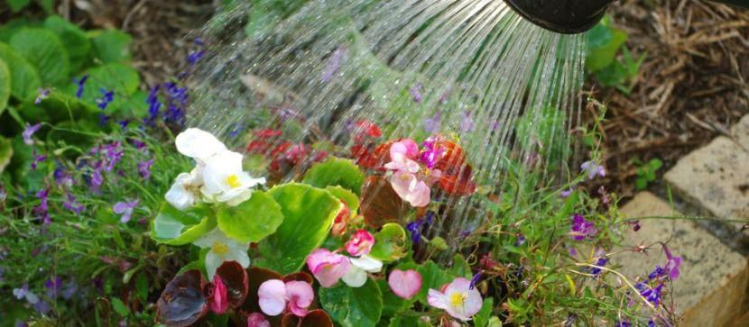 Por qu no se pueden mojar las flores cuando se riega for Como evitar que salga hierba en el jardin