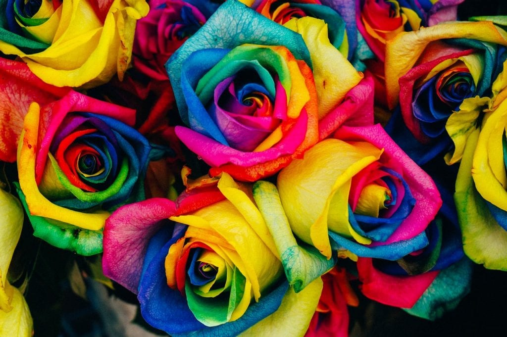 Las rosas multicolor no son naturales