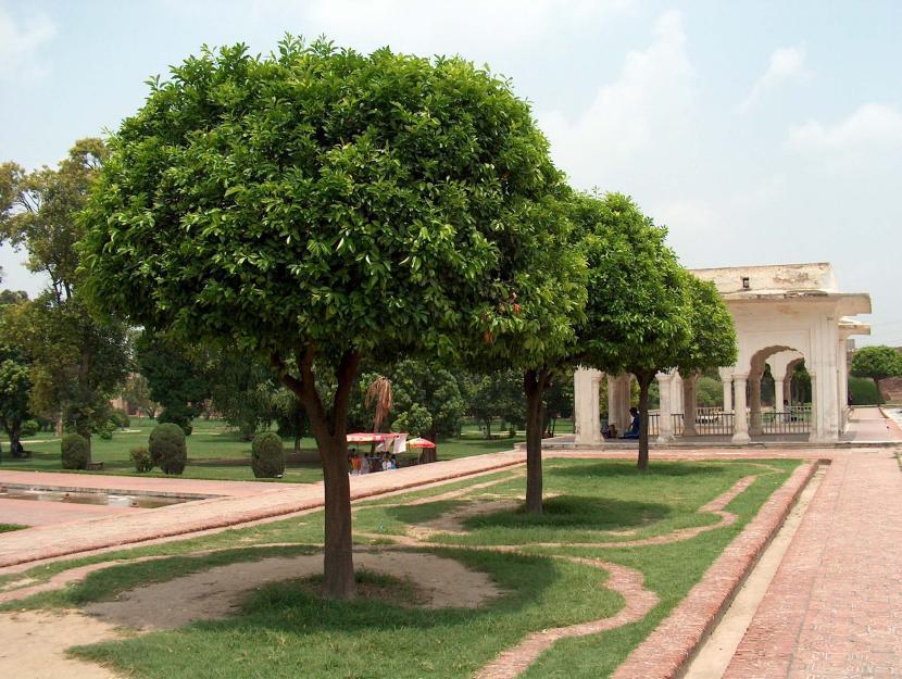 Consejos para elecci n de rbol de jard n for Arboles ornamentales jardin