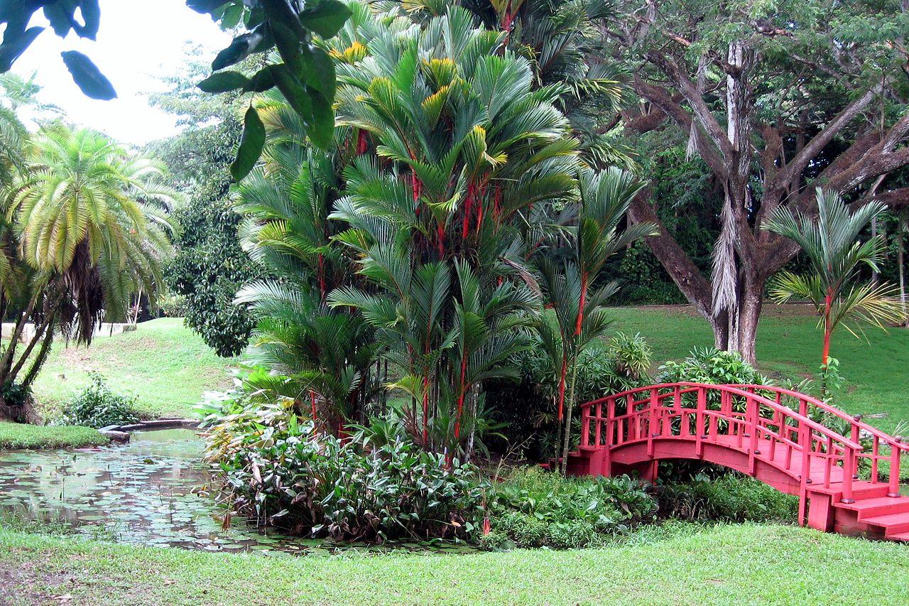 La Cyrtostachys renda es una palmera tropical