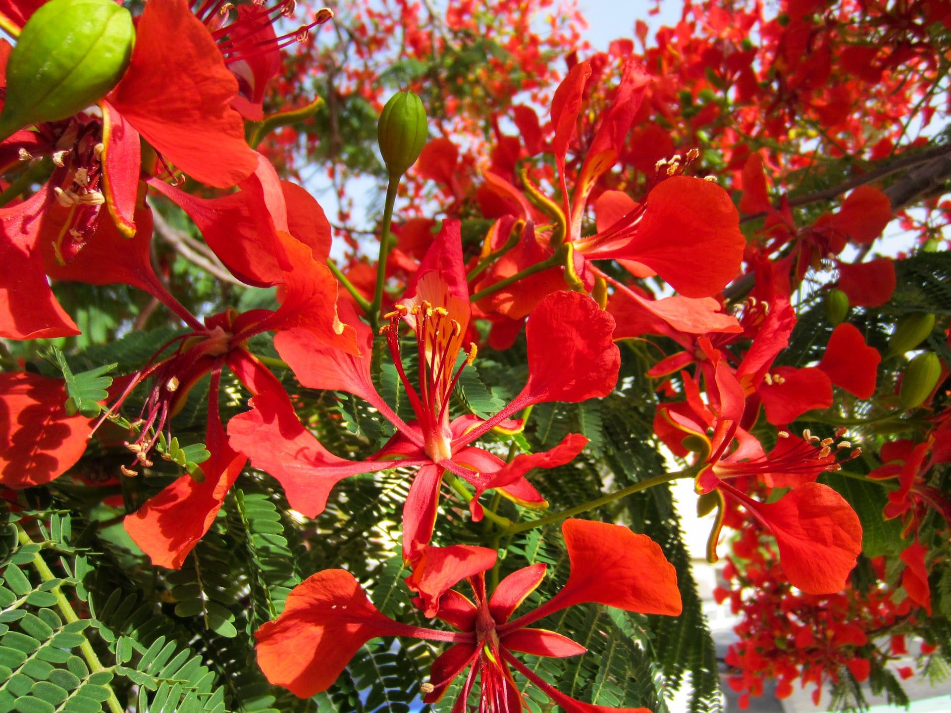 Las flores de los árboles tropicales son bonitas