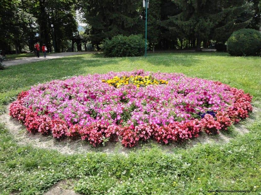 Macizo de plantas