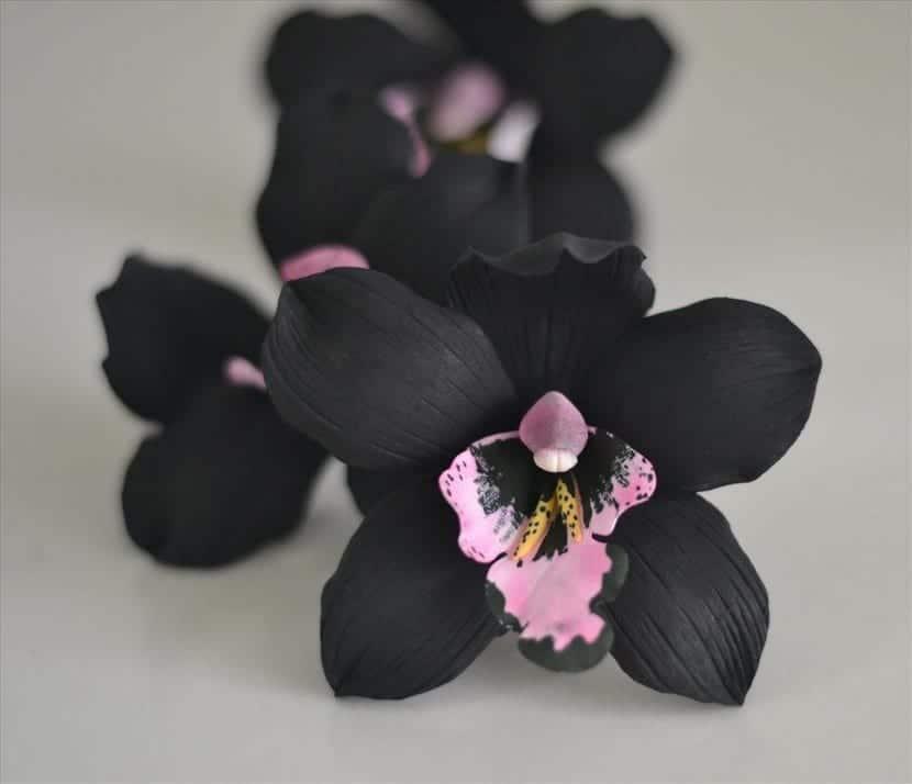 Orquidea Negra Una Planta Unica