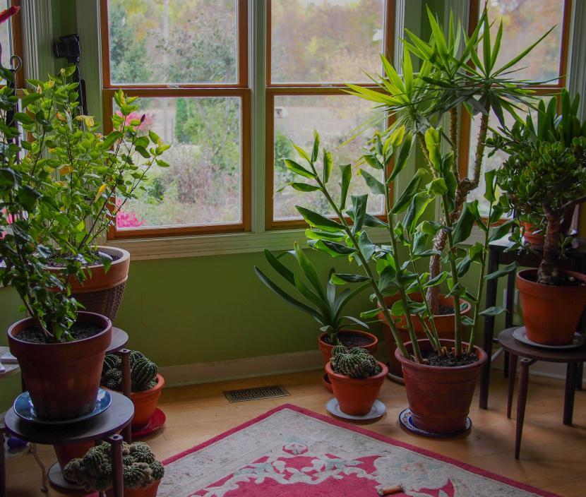 Plantas cerca de una ventana