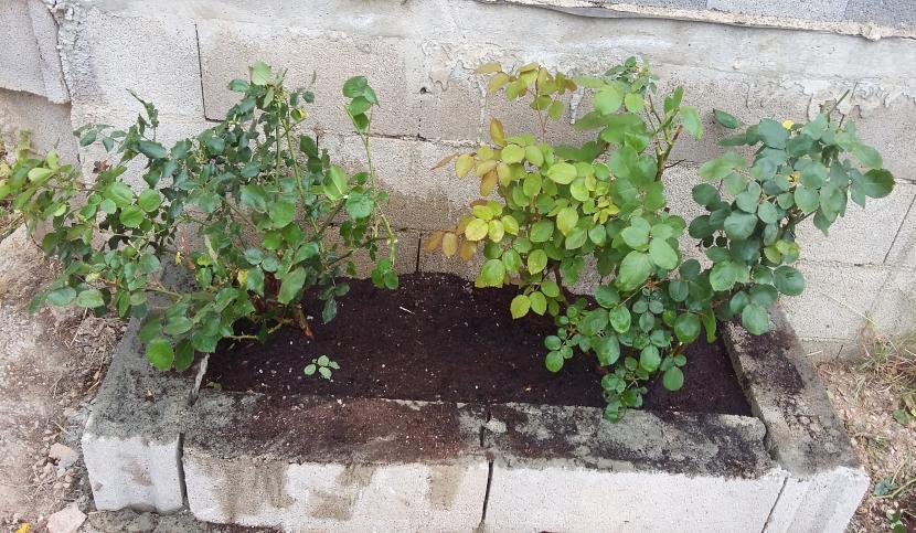 Construir una jardinera con bloques en el jard n for Que plantas poner en una jardinera