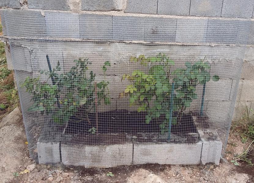 Tela metálica en jardinera