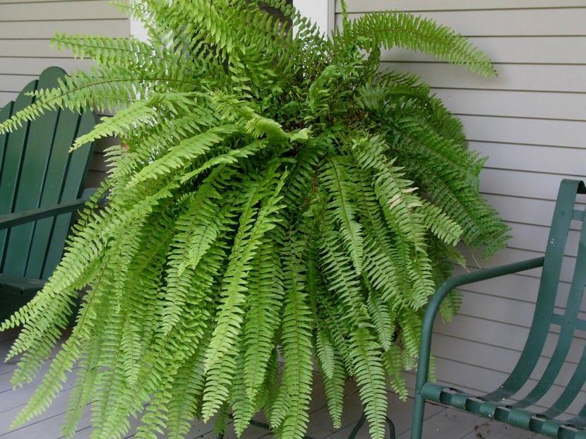 Plantas recomendadas para jardines verticales for Plantas utilizadas en jardines verticales