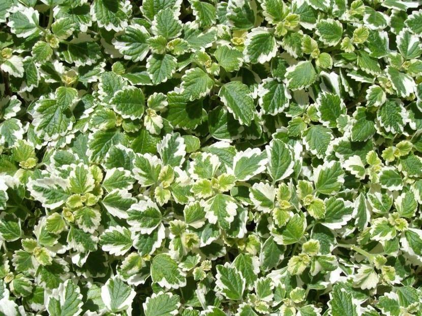 Plantas recomendadas para jardines verticales - Plantas para jardines verticales ...