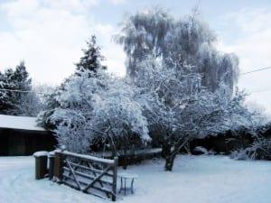 Prepara tu jardín para el invierno