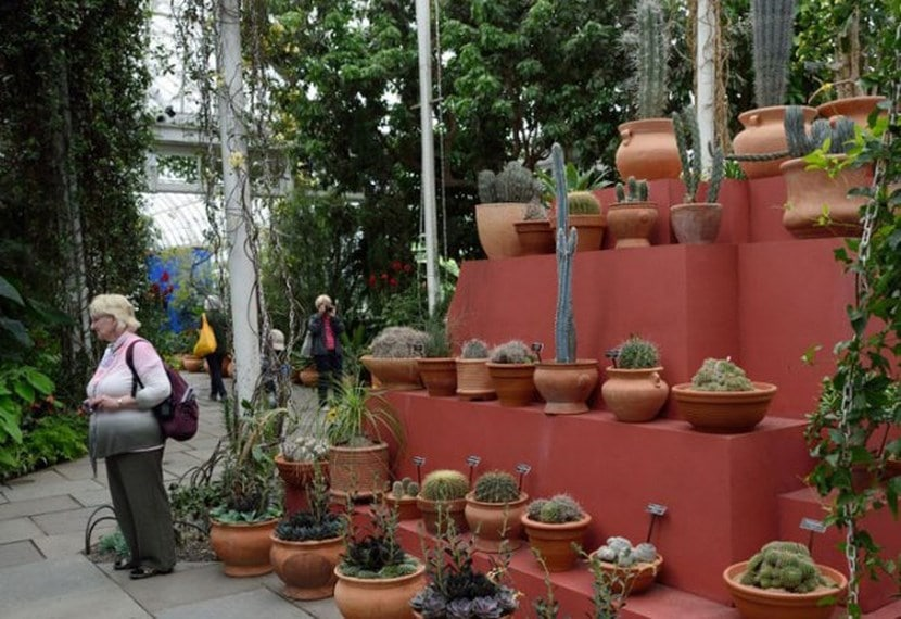Jardin de Frida Kahlo