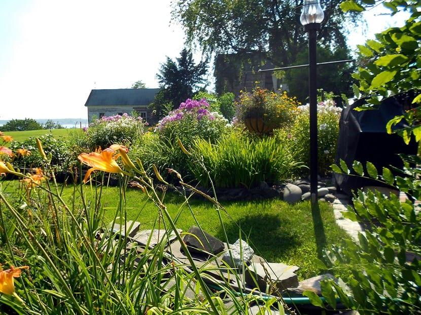 Plantas en verano