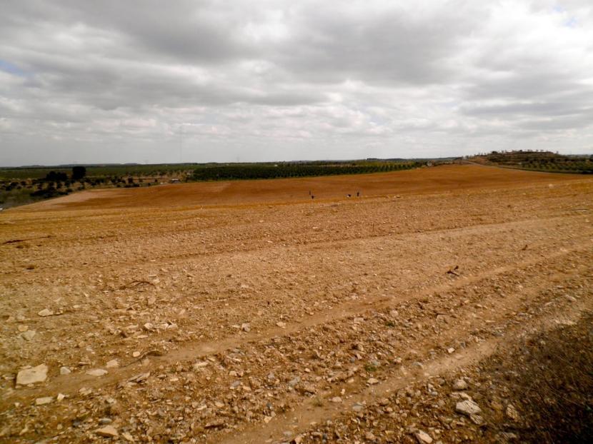 Preparar el terreno es fundamental antes de plantar nada