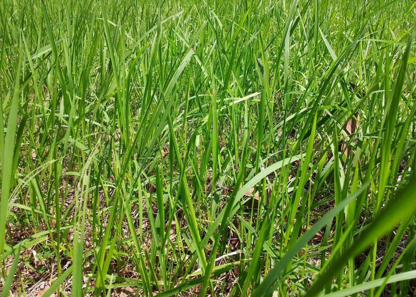 Las hierbas silvestres se han de quitar antes de plantar nada