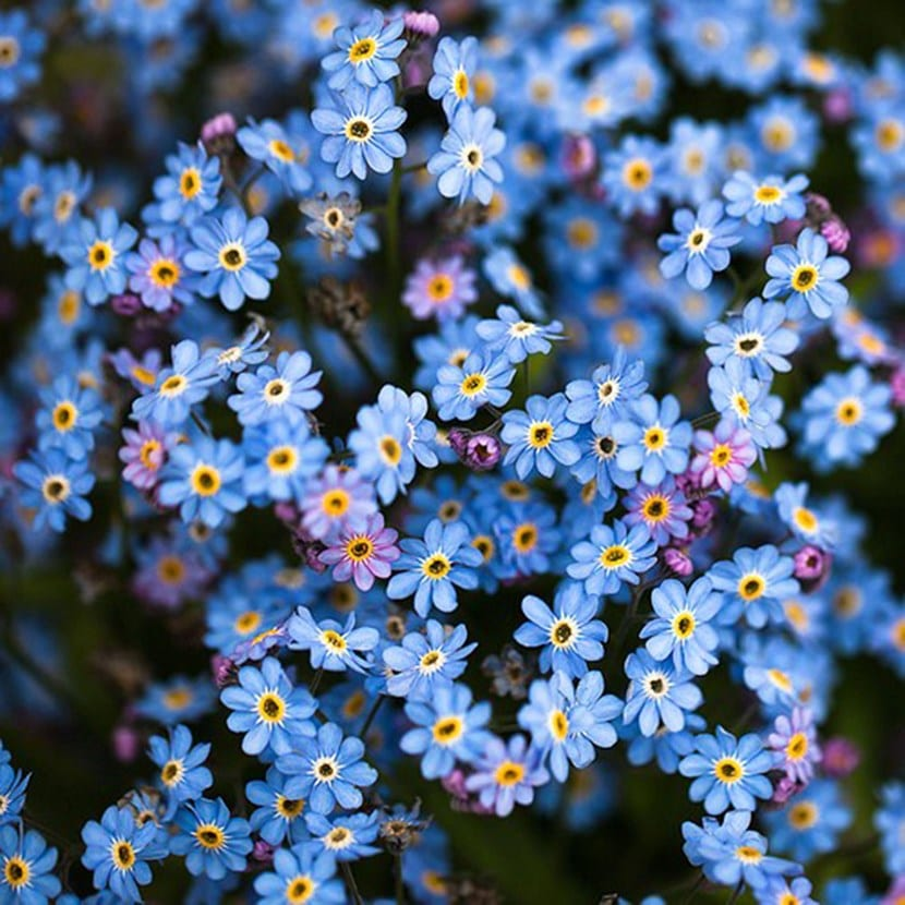 Las mejores plantas perennes con flores for Plantas perennes exterior