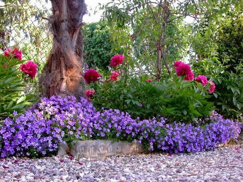 D nde estudiar jardiner a y paisajismo en espa a for Aiuole sempreverdi
