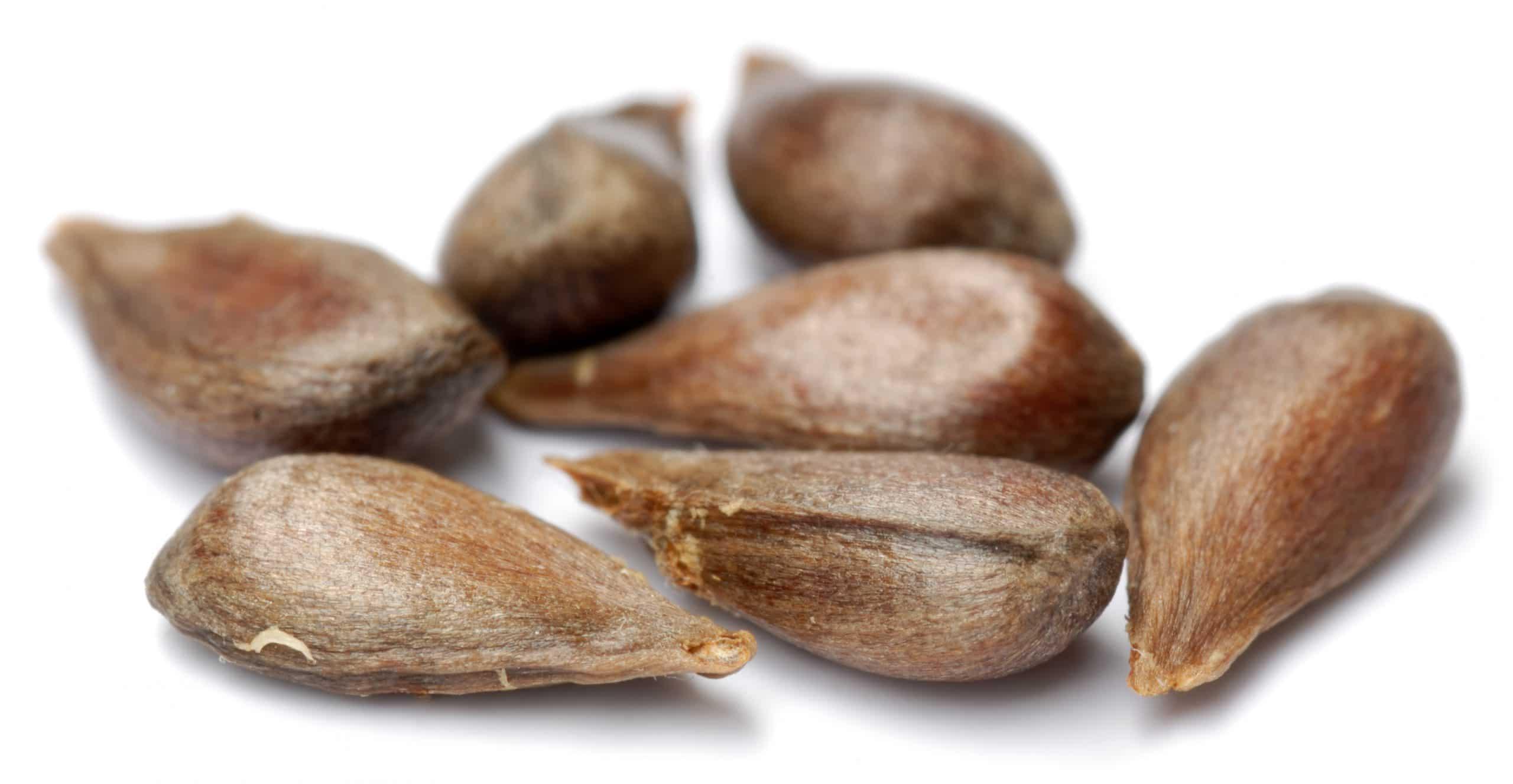 Las semillas pueden germinar más rápido con tratamientos pregerminativos