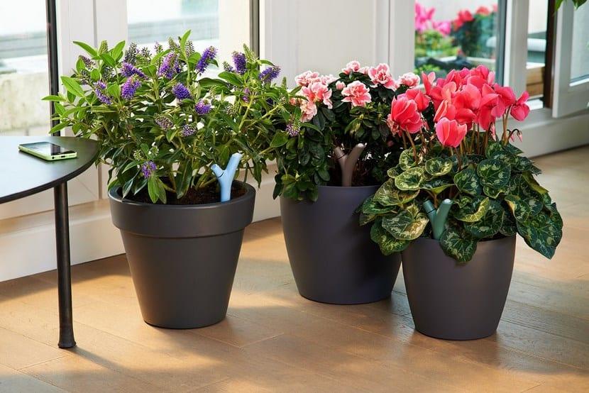 Sensor humedad de plantas