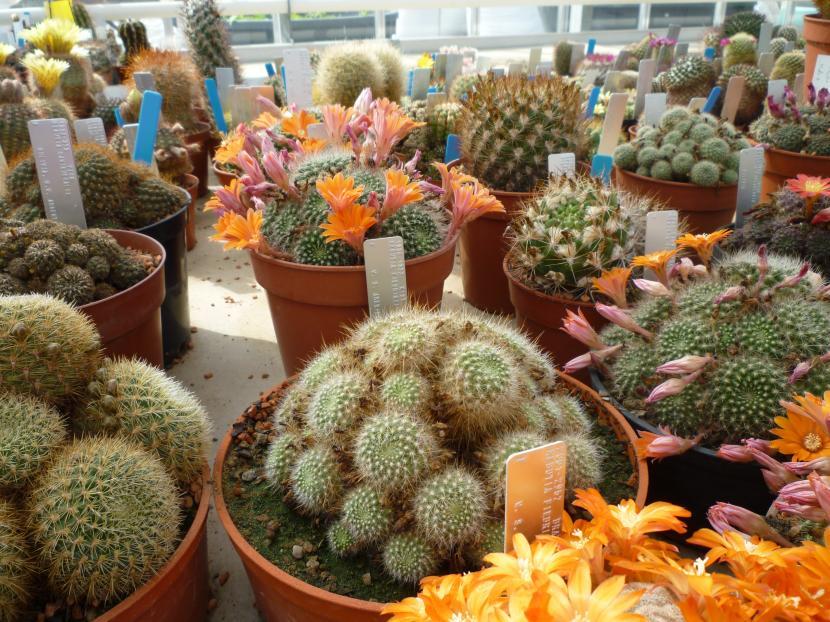 D nde comprar plantas for Donde venden cactus
