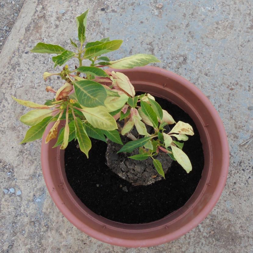 Centrar planta