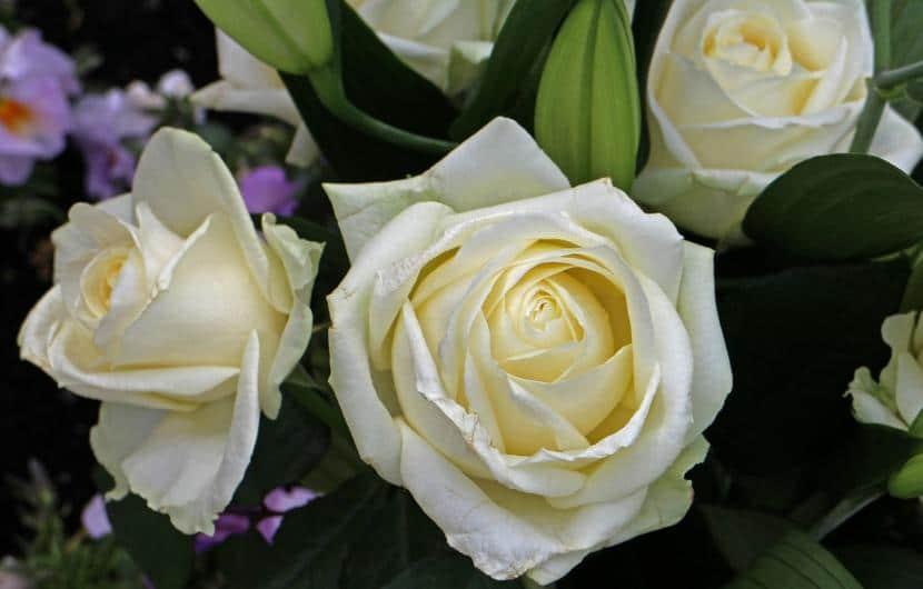Flores blancas cortadas