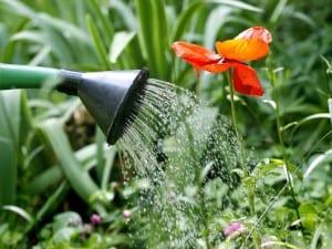 Regando las plantas
