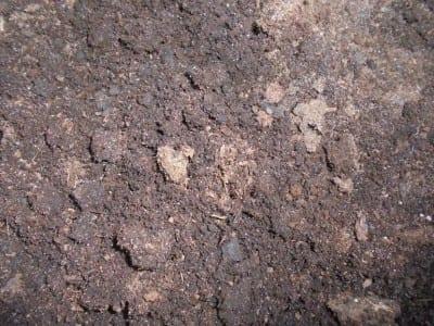 Turba, un sustrato para plantas