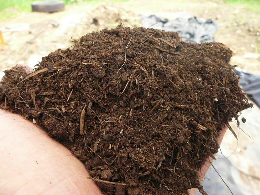 Abono orgánico en polvo para el suelo