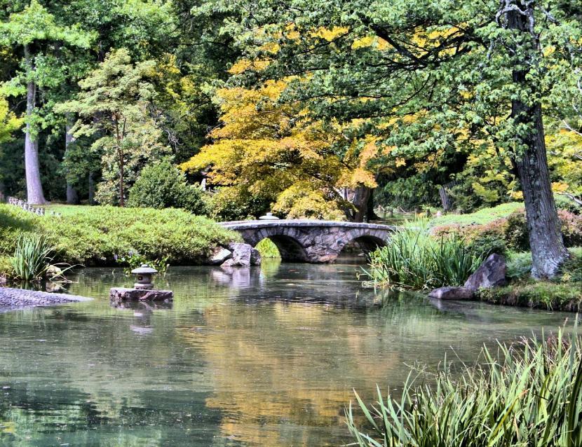 Lista de plantas de ribera o margen for Estanque japones