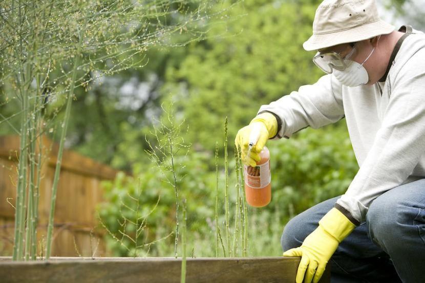 Un hombre echando herbicida