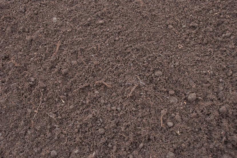 Turba negra, sustrato para alhelíes