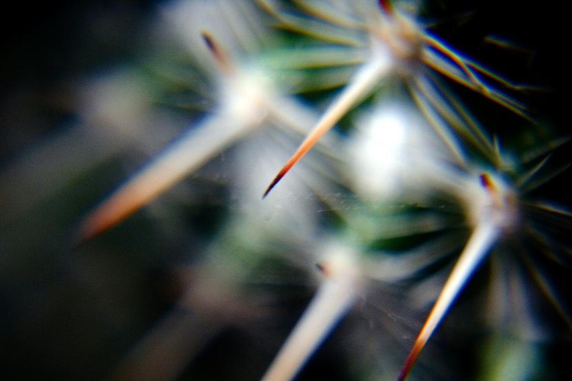 Espinas del cactus