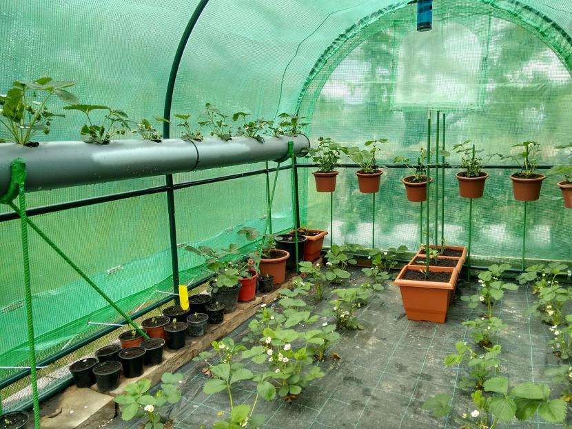 Invernadero para hortícolas