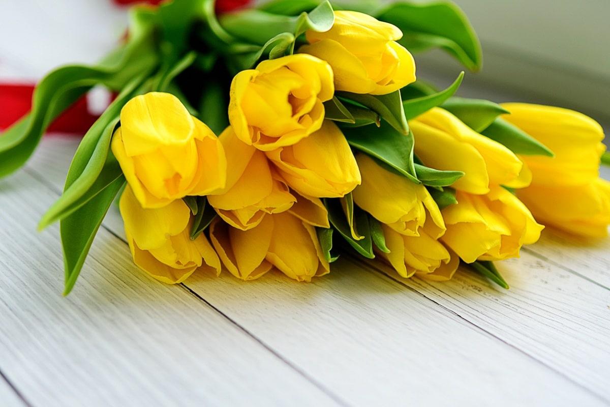 Los tulipanes amarillos cambian de significado si se regalan en ramo