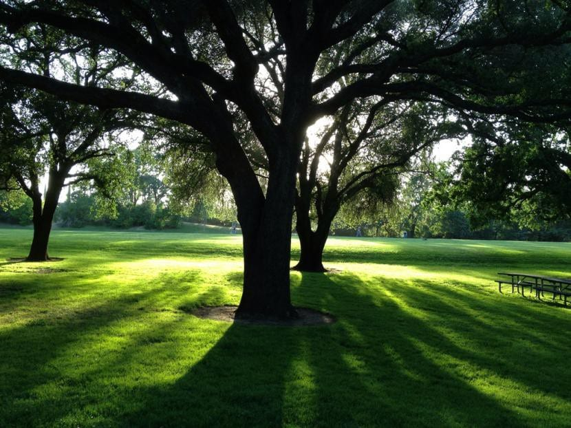 Árboles en parque
