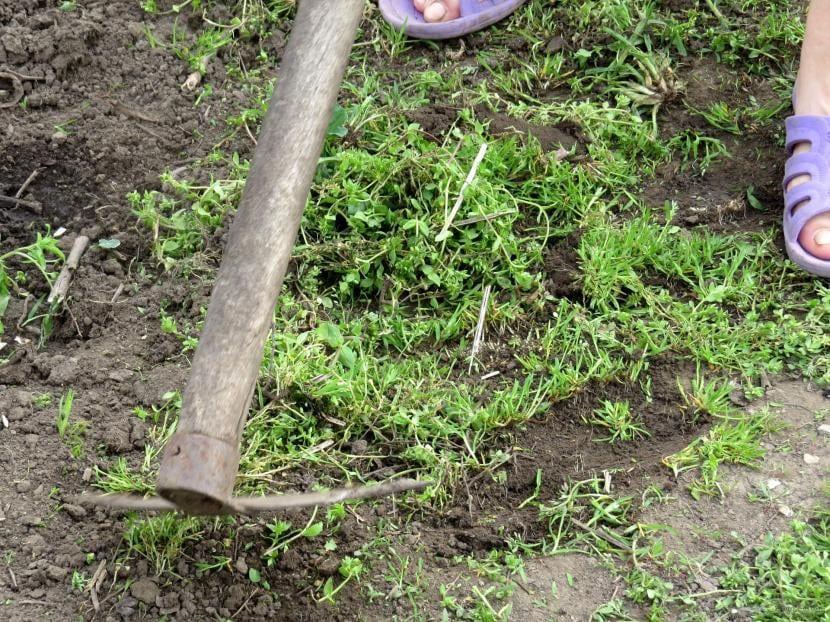 Quitando hierba con una azada