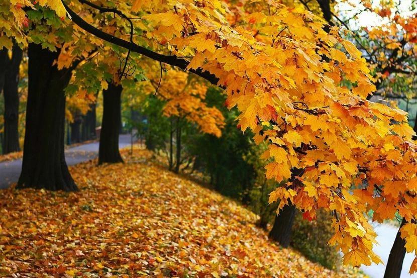 Árboles durante el otoño