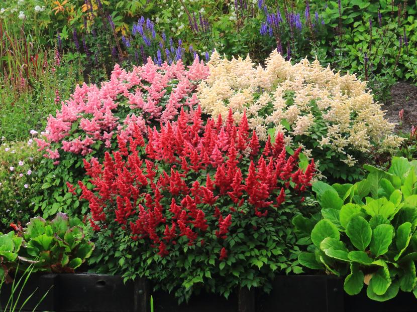 Plantas para un jard n de rocallas for Plantas para decorar jardines