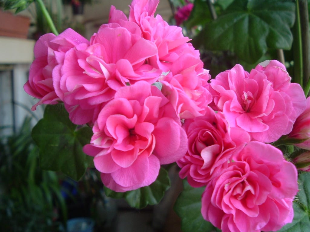 6 Nombres De Flores Comunes Que Debes Recordar