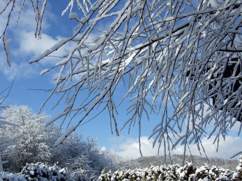 Las plantas hibernan durante el invierno