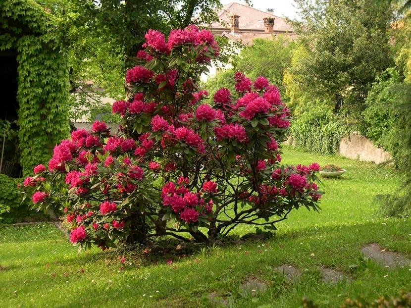 Arbustos para disfrutar en invierno for Arbustos de jardin