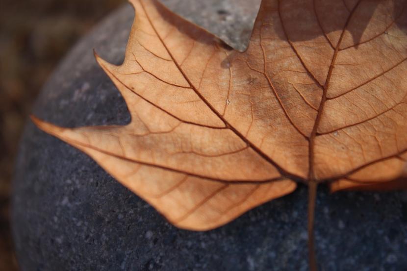 Hojas marrones en plantas qu significan for Arboles que no se le caen las hojas en invierno
