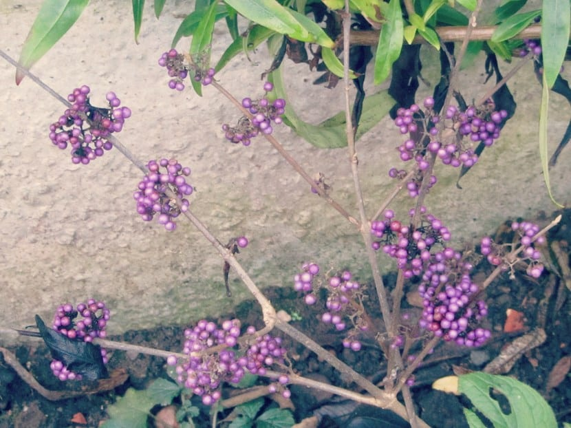 Plantas en diciembre