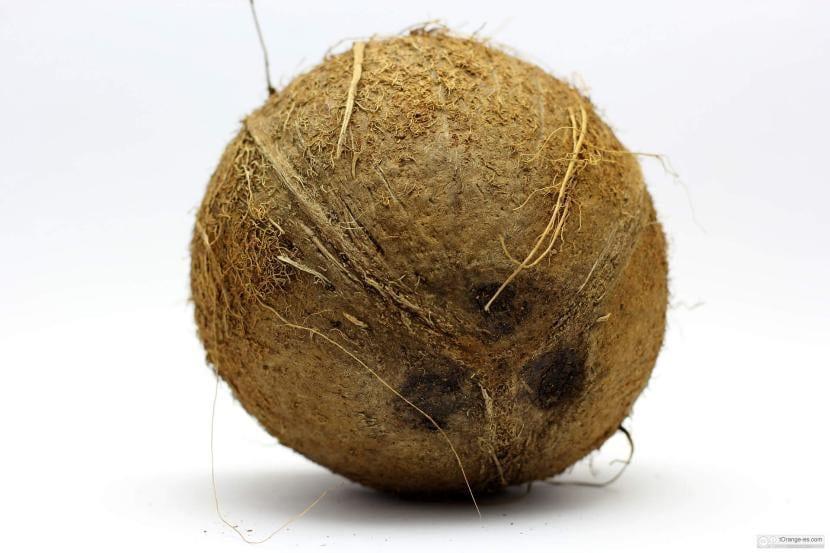 Coco, el fruto de la palmera cocotera