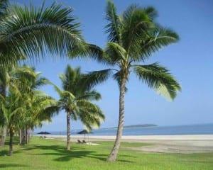 Palmera cocotera en una playa